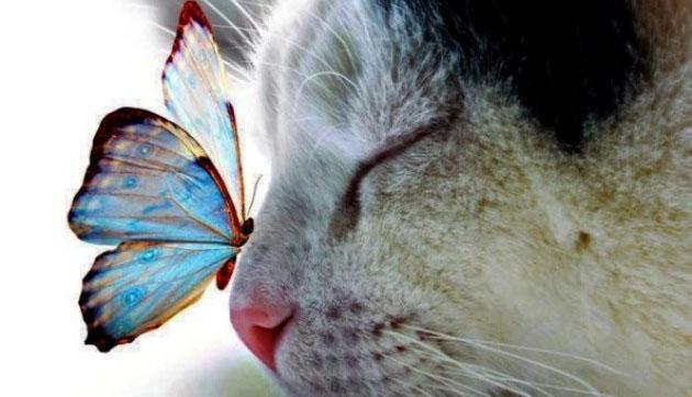 Ognuno ha una favola dentro che non riesce a leggere da solo. Ha bisogno di qualcuno che, con la meraviglia e l'incanto negli occhi, la legga e gliela racconti.